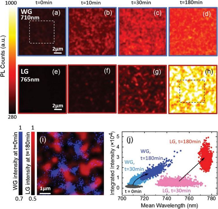 An optical nanoreporter of endolysosomal lipid accumulation reveals enduring effects of diet on hepatic macrophages in vivo